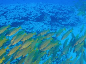 An enchanting underwater world